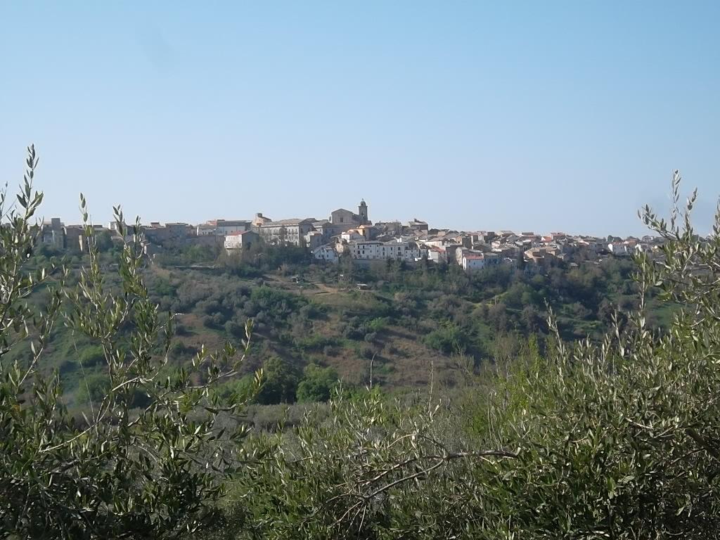 rif 1049 – Scerni – Terreno edificabile – € 60000