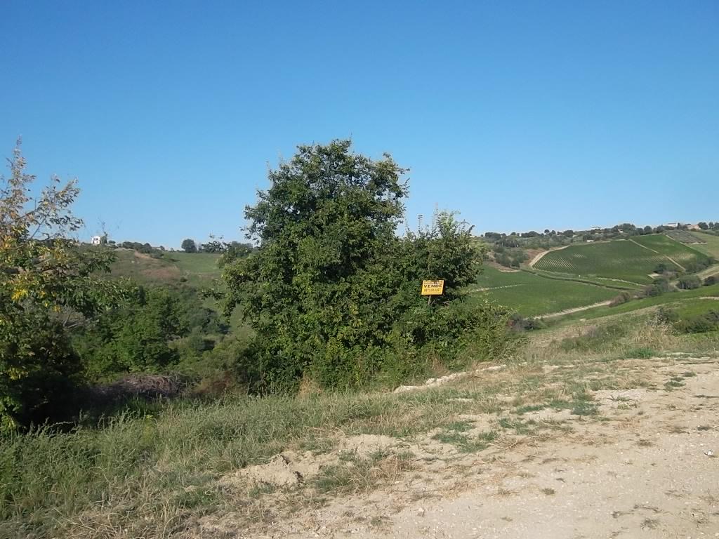 rif 885 Pollutri (CH) – Terreno agricolo – € 12000