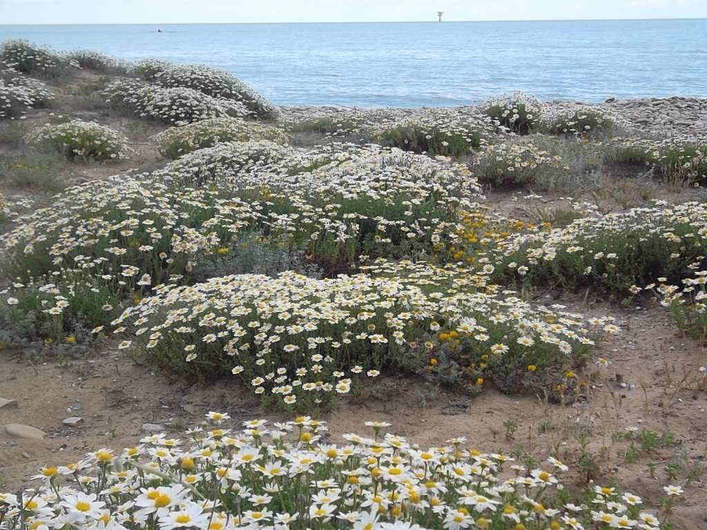 Tratto di spiaggia incontaminata a Casalbordino